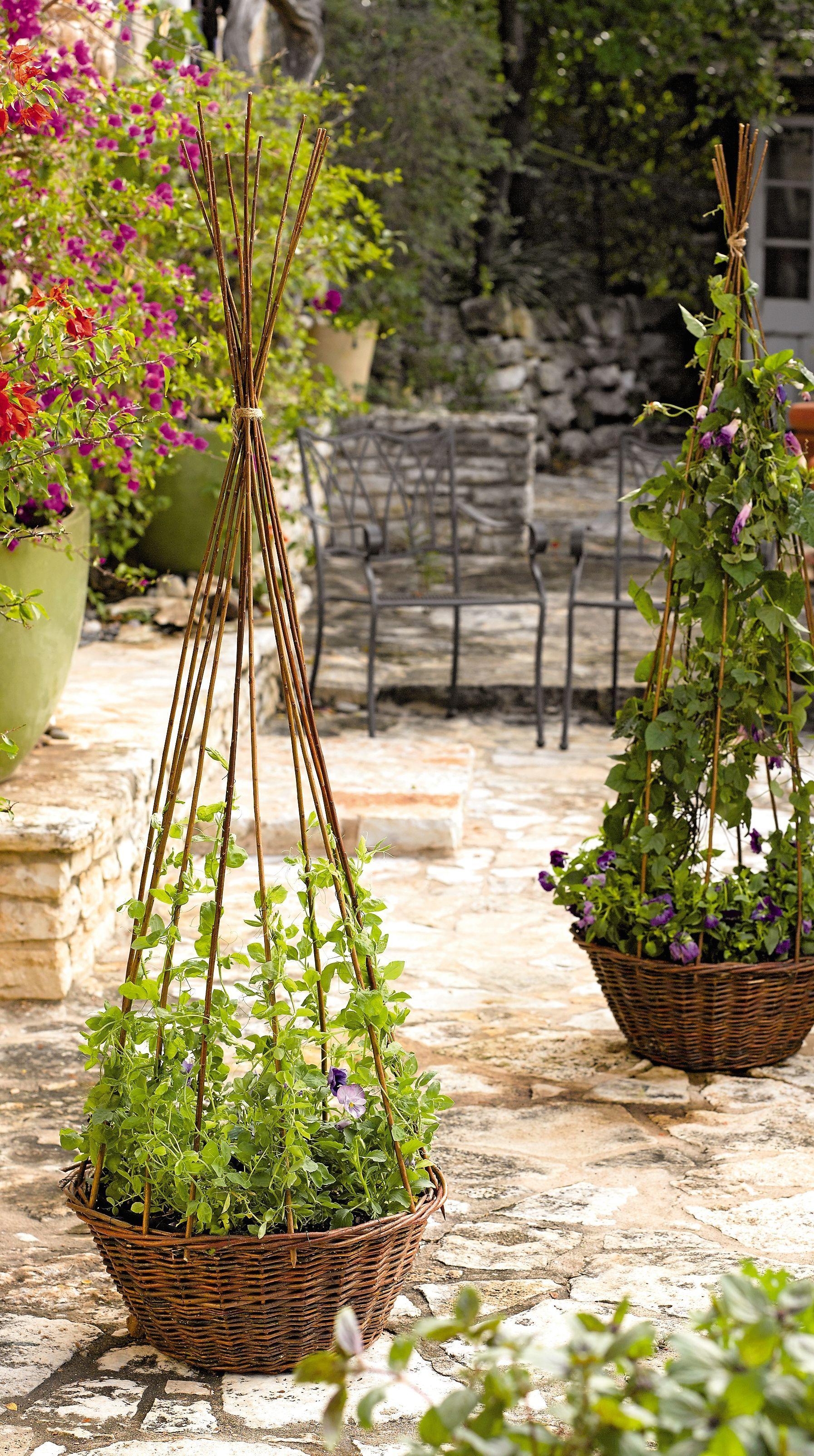 Willow Obelisk Planter Garden Obelisk Gardener S Supply Avec