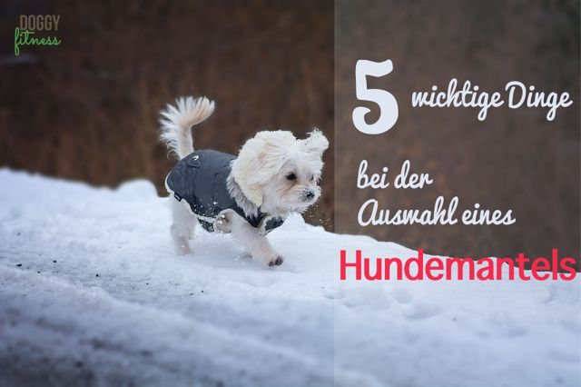 Diese 5 Punkte solltest du bei der Auswahl vom Hundemantel beachten ...