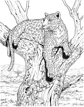 Leopard 27 Coloring Page Super Coloring Animal Coloring Pages Super Coloring Pages Animal Coloring Books