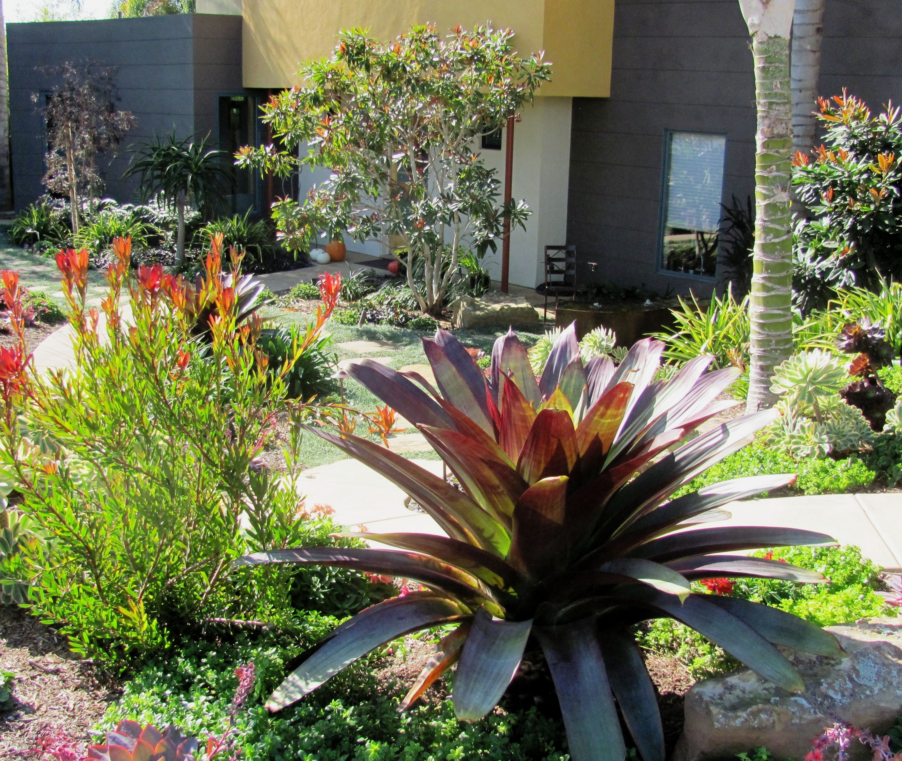 lush landscaping ideas. Lush And Waterwise Landscape Design In Carlsbad Landscaping Ideas G