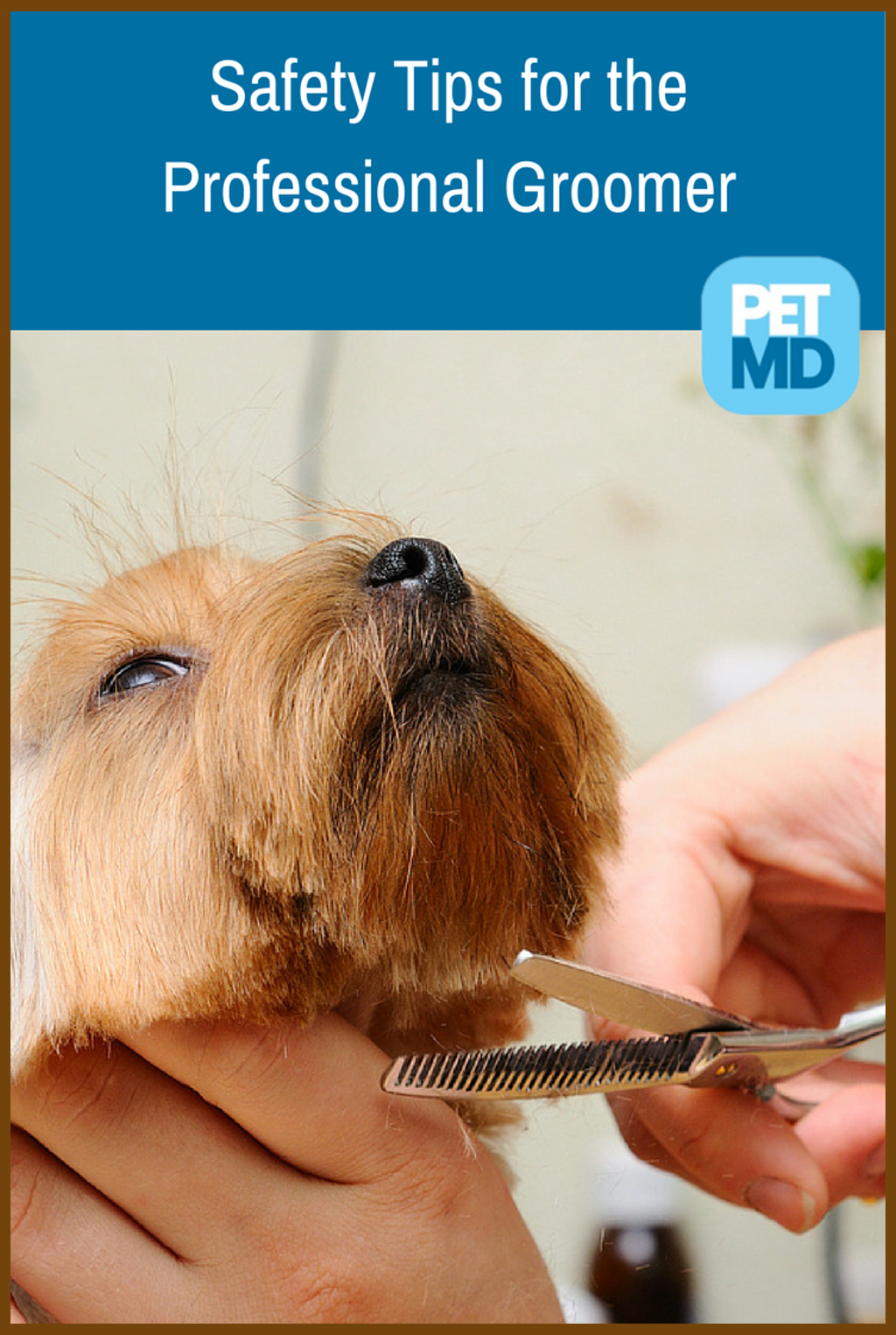 Pin On All About Animals Dog Grooming