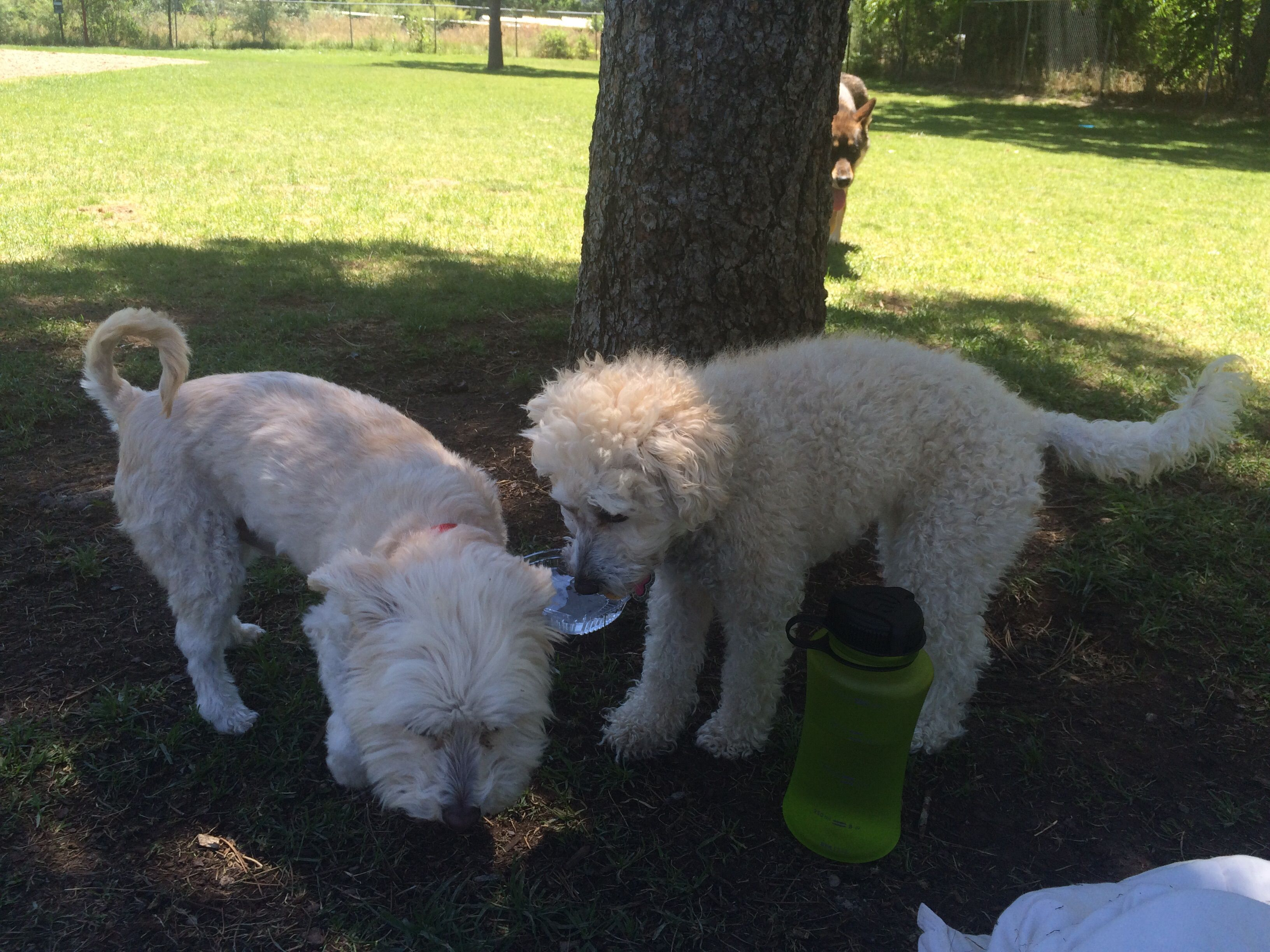 The City S First Off Leash Dog Park Features A Double Fenced Entry Doggie Waste Stations And A Fun Fire Hydrant Dogs Of All Sizes Ar Dog Park Dogs Dog Leash