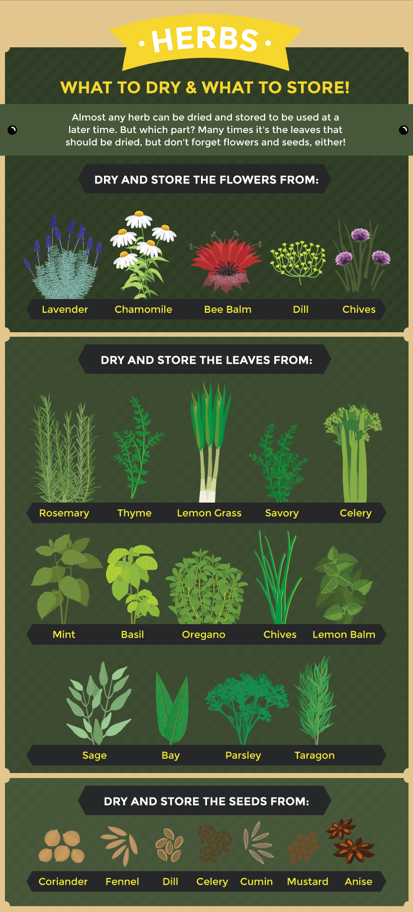 Creative Ways To Use The Herbs Grown In Your Garden Herbs