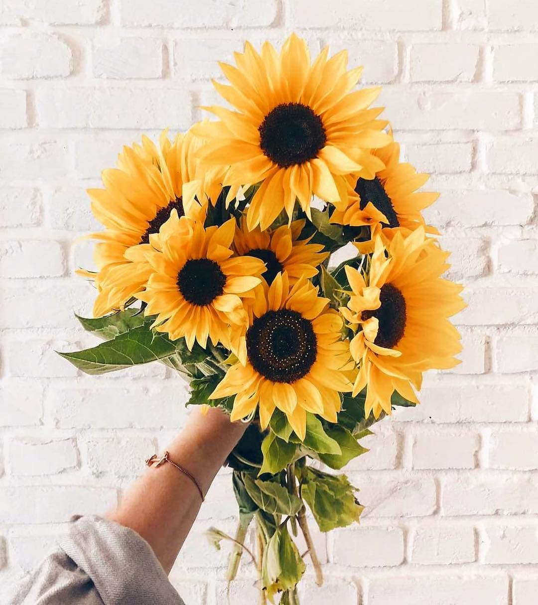 Watch The Best Youtube Videos Online Countdown Spring 87 Days Left Summer 87 Days Halloween Flower Aesthetic Sunflower Wallpaper Flower Wallpaper