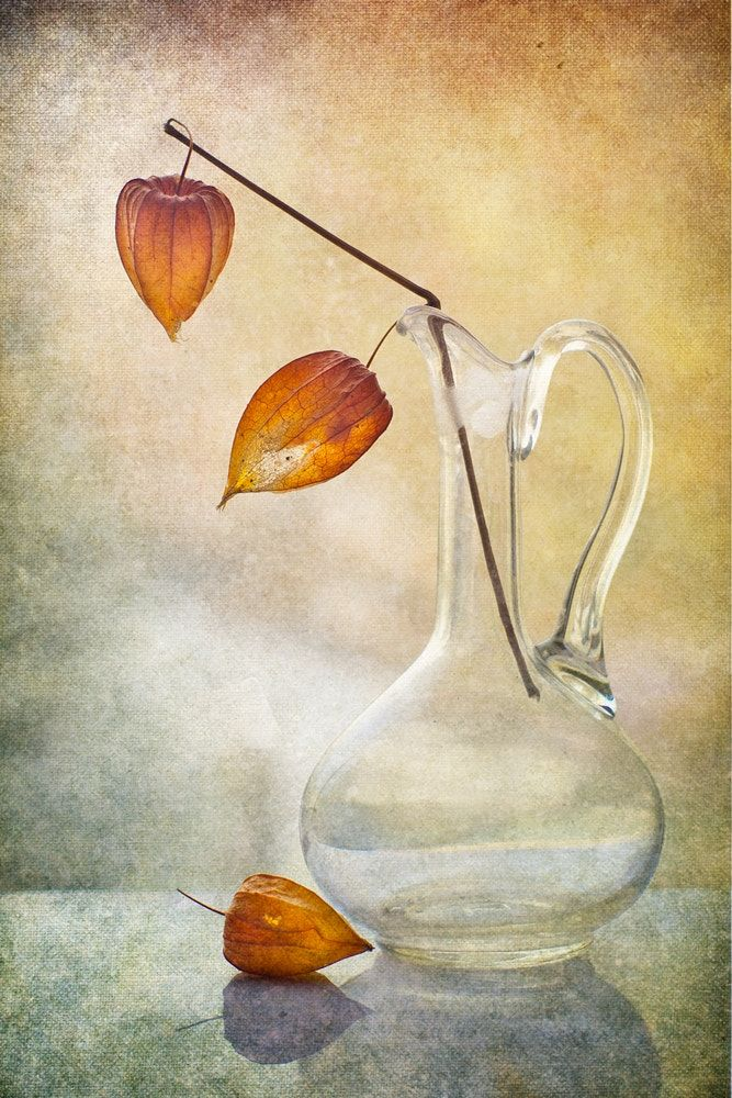 still life with physalis - null