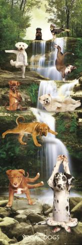 Yoga Dogs-Waterfall Julisteet AllPosters.fi-sivustossa