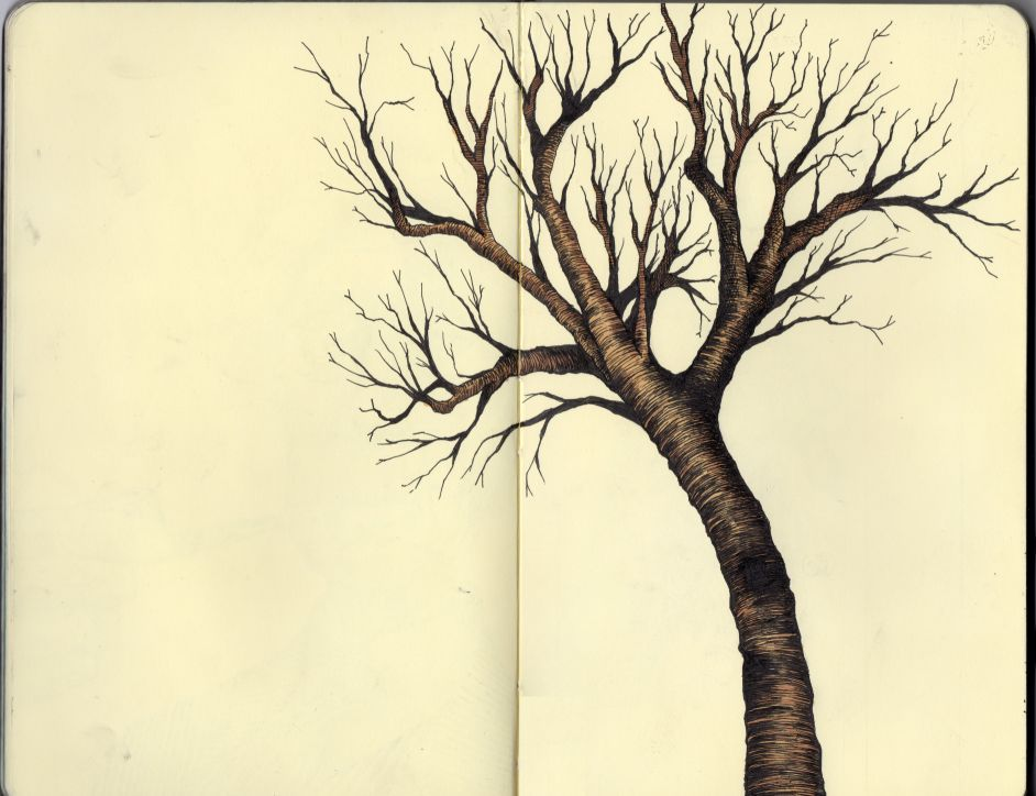 drawings of trees images this first drawing is of a tree in my backyard as