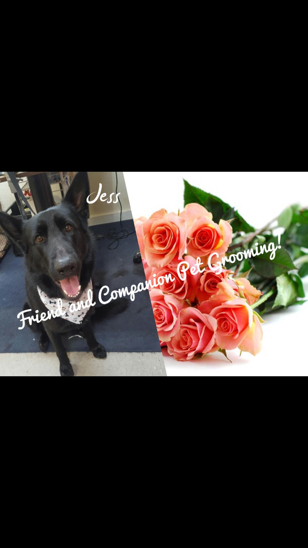 Would You Love To Be A Dog Groomer Contact Us Today Friend And