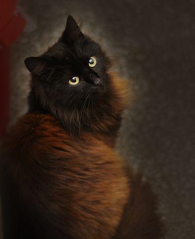 Negrita Cats And Kittens Beautiful Cats Pretty Cats
