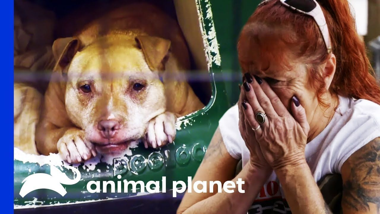 After 13 Years At Villalobos Summer Finds Her Forever Home Pit Bulls Parolees Youtube Pitbulls Pit Bulls Parolees Animal Planet