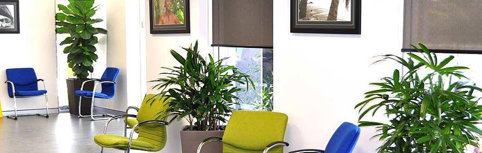 Best indoor plants best indoor plants indoor plants plants