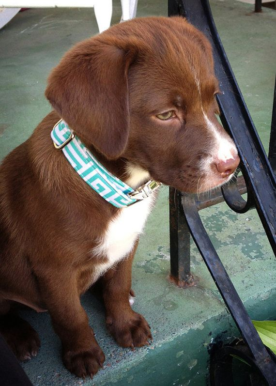 Dog Collar in Turquoise and White for Female or by ZaleyDesigns, $25.00