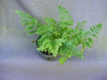 Top 50 House-Plants-Ferns-Sale - UpTo 70% Off House-Plants-Ferns-Sale, New Models - Compare House-Plants-Ferns-Sale Cheaper prices - Compare99.com