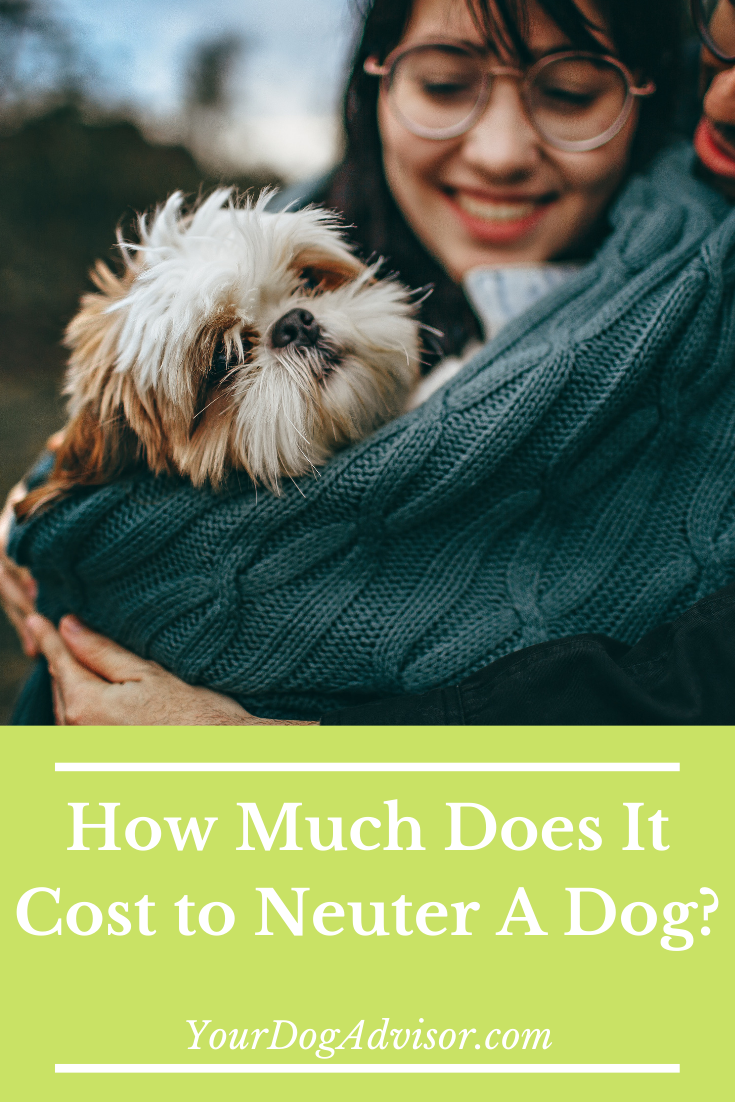 How Much Does It Cost To Get Your Pet Spayed