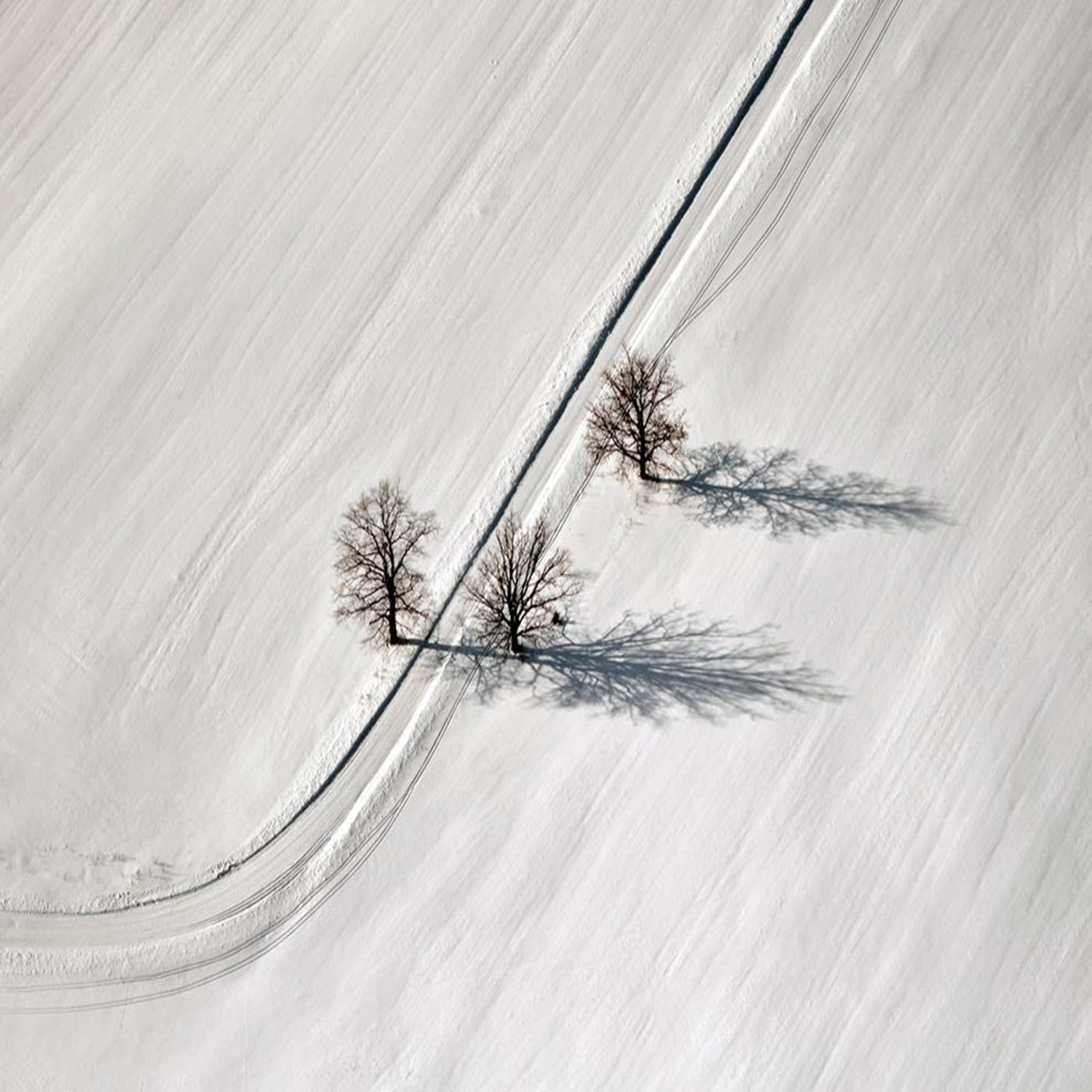 Árvores cobertas por neve, Latvia. Fotógrafo: Mihails Ignats.