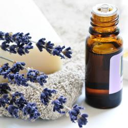 Utilisez des huiles essentielles contre les piqûres d'insectes – Aromathérapie   – Bien-être et Santé