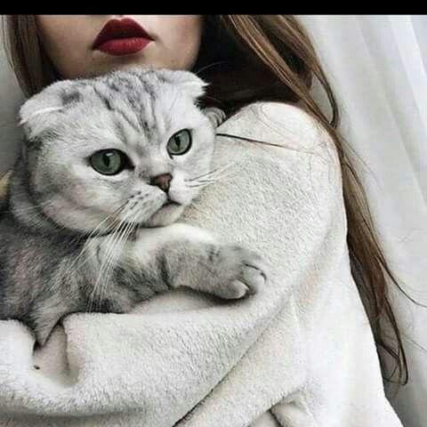 pinajeeblarki on udas  cat aesthetic cats tumblr