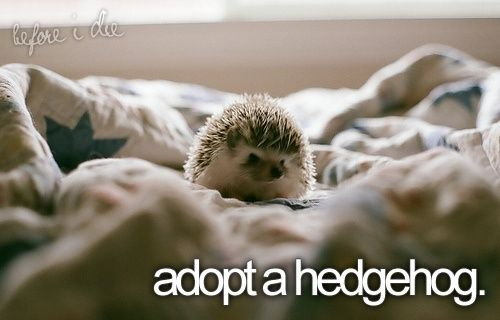 How cute is this little guy?! I definitely would adopt one.