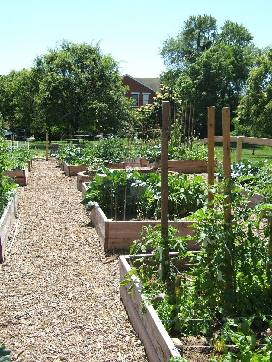 Community garden google search ss community garden for Great vegetable garden ideas