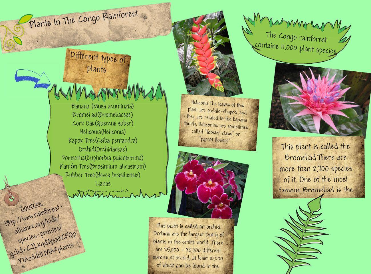 Rainforest Plants List The Image Kid