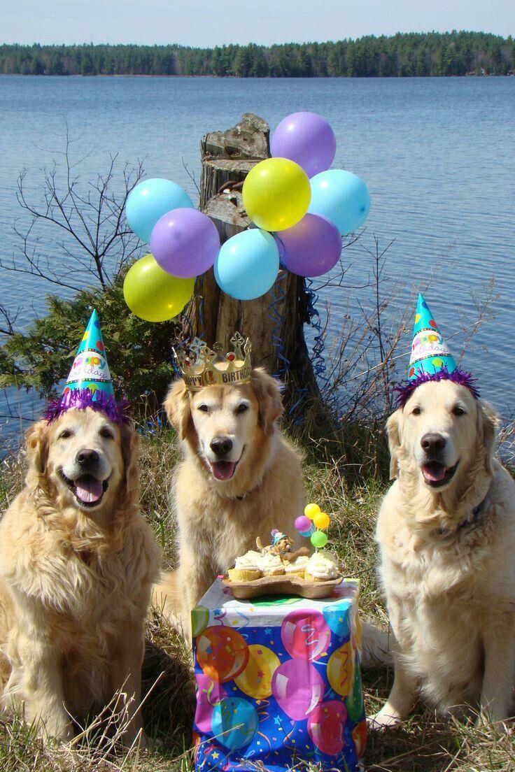 Картинка с собакой на день рождения