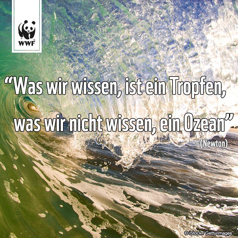 Zitat Zum Sonntag Was Wir Wissen Ist Ein Tropfen Was Wir Nicht Wissen Ein Ozean Newton Zitate Schone Spruche Ozean
