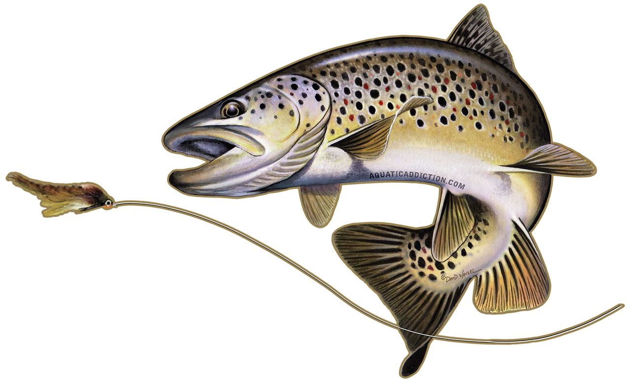 Brown trout decal fish pinterest brown trout and trout for Free fishing stickers