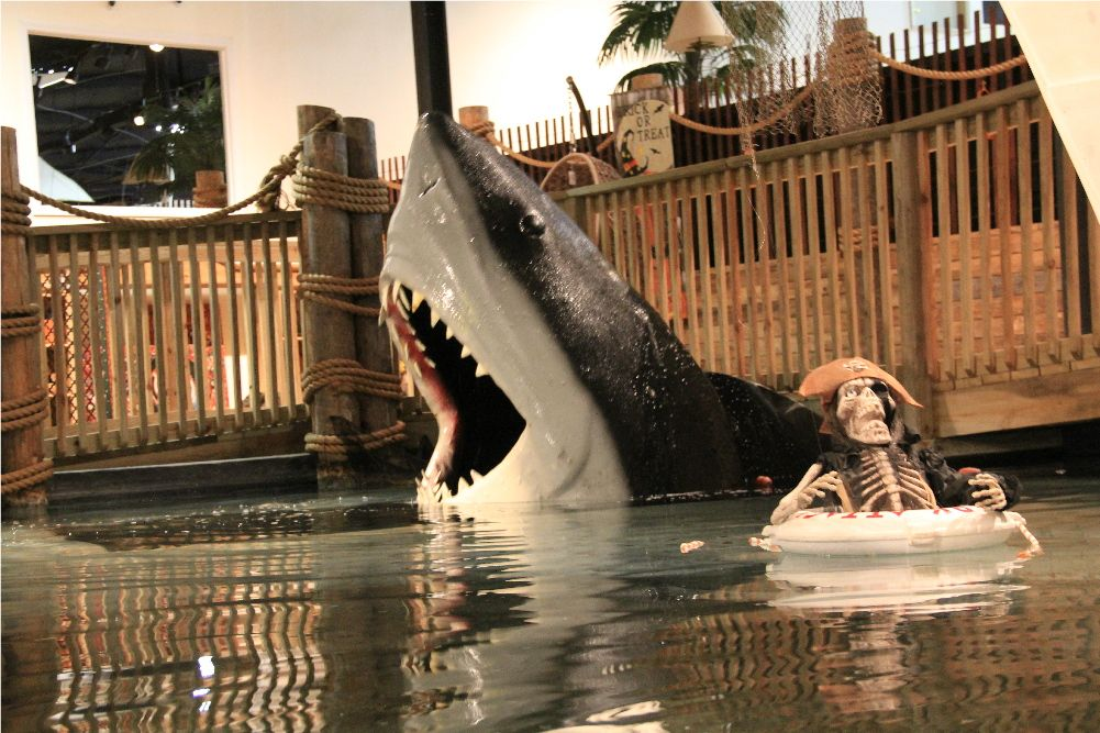 Don T Feed The Sharks At Hefner Furniture In Farmington Mo