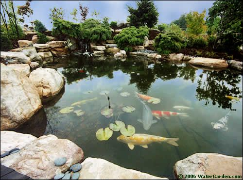 Garden koi pond my dad and i had one when i was little for Where can i buy fish to stock my pond