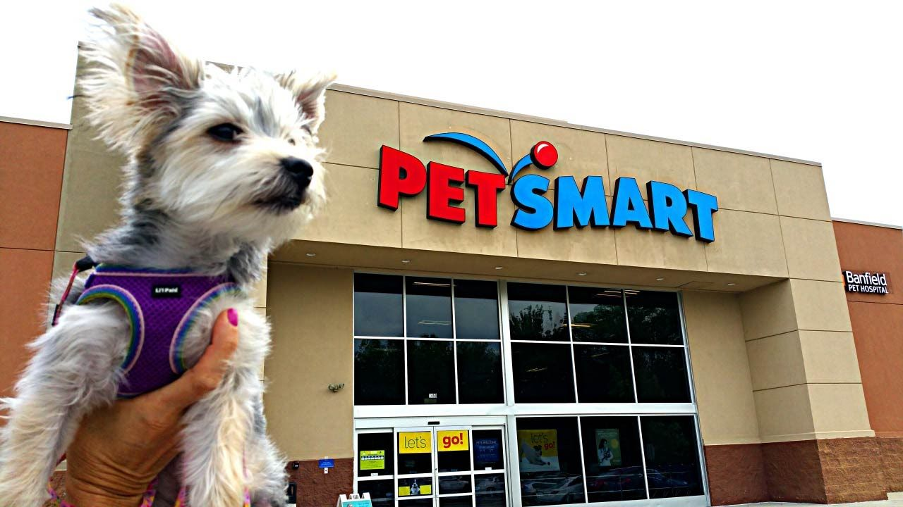 Image Result For Pet Store Pet Store Dogs Of The World Pets