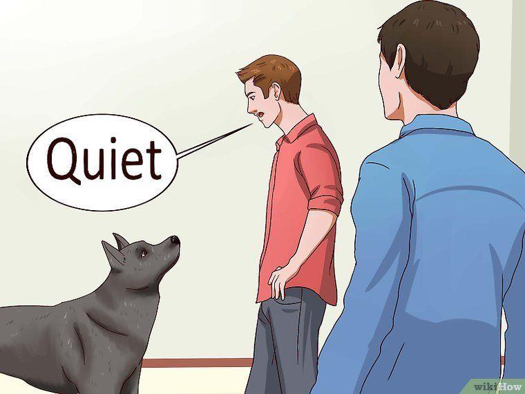 Einem Hund Das Bellen Abgewohnen Hunde Hunde Erziehen Bellen Abgewohnen