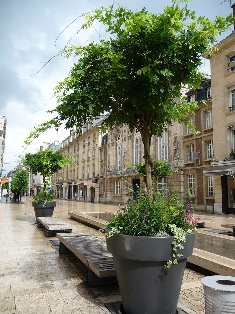 Arbre En Pot Terrasse Épinglé par ll koler sur diseño de exteriores | arbres en