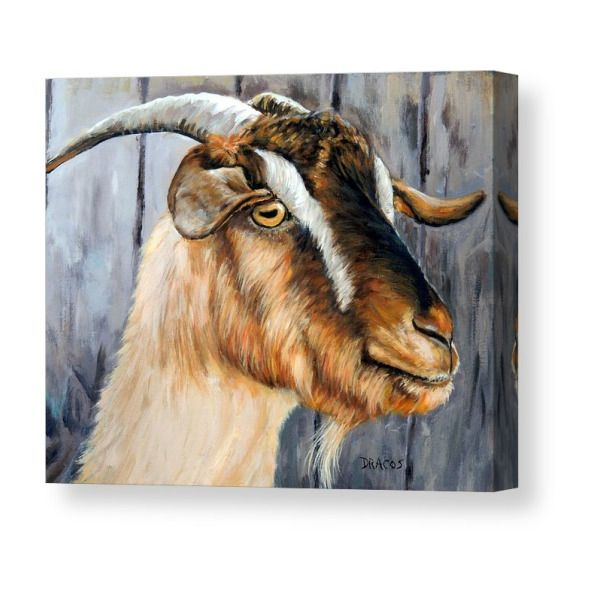 Brown Cashmere Goat Painting Canvas Print