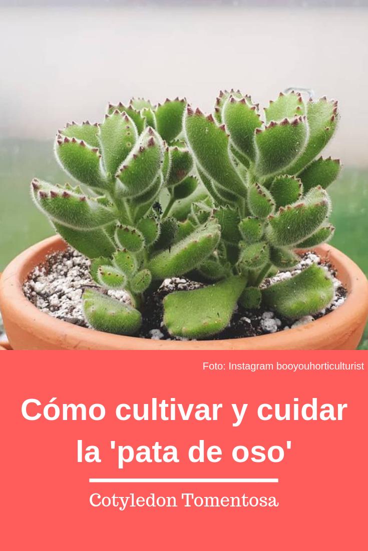 Todo sobre el cultivo y cuidados de las suculentas for Informacion sobre el cactus