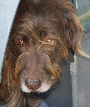 Andalusien Hunde