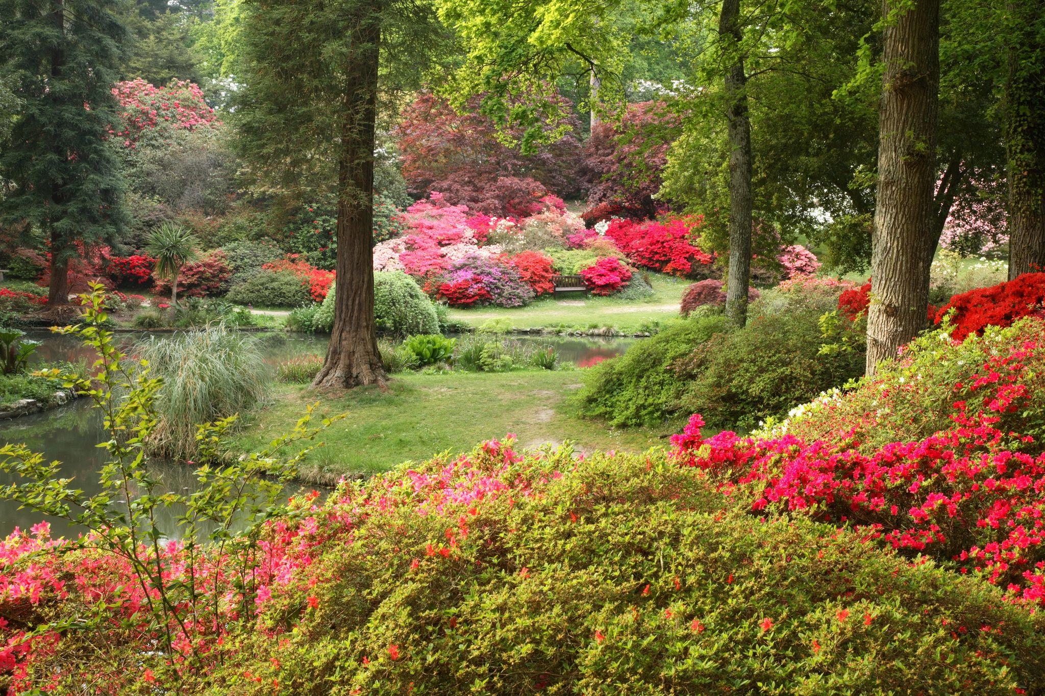 Фото садовых картинок