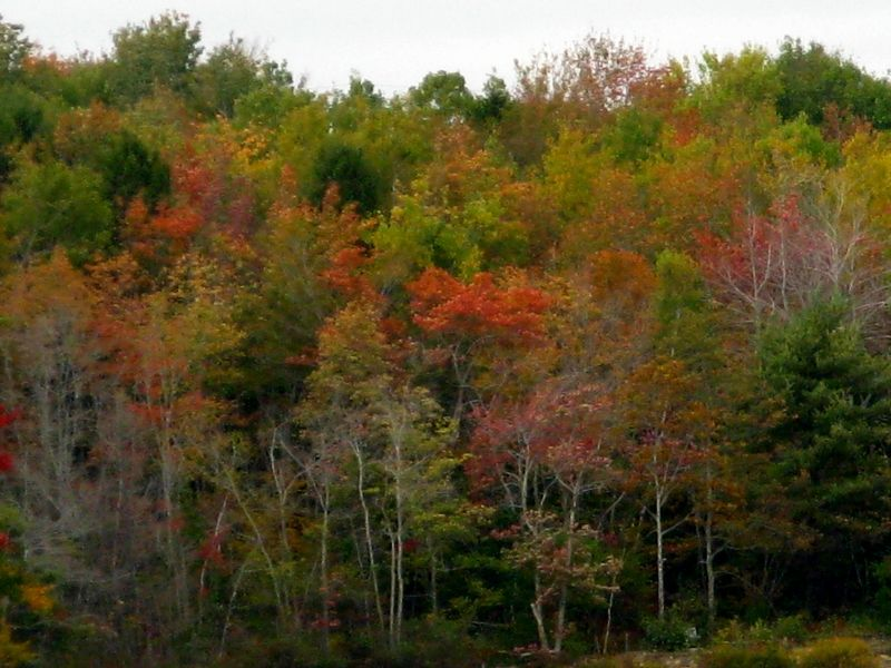 Cape Breton in the fall