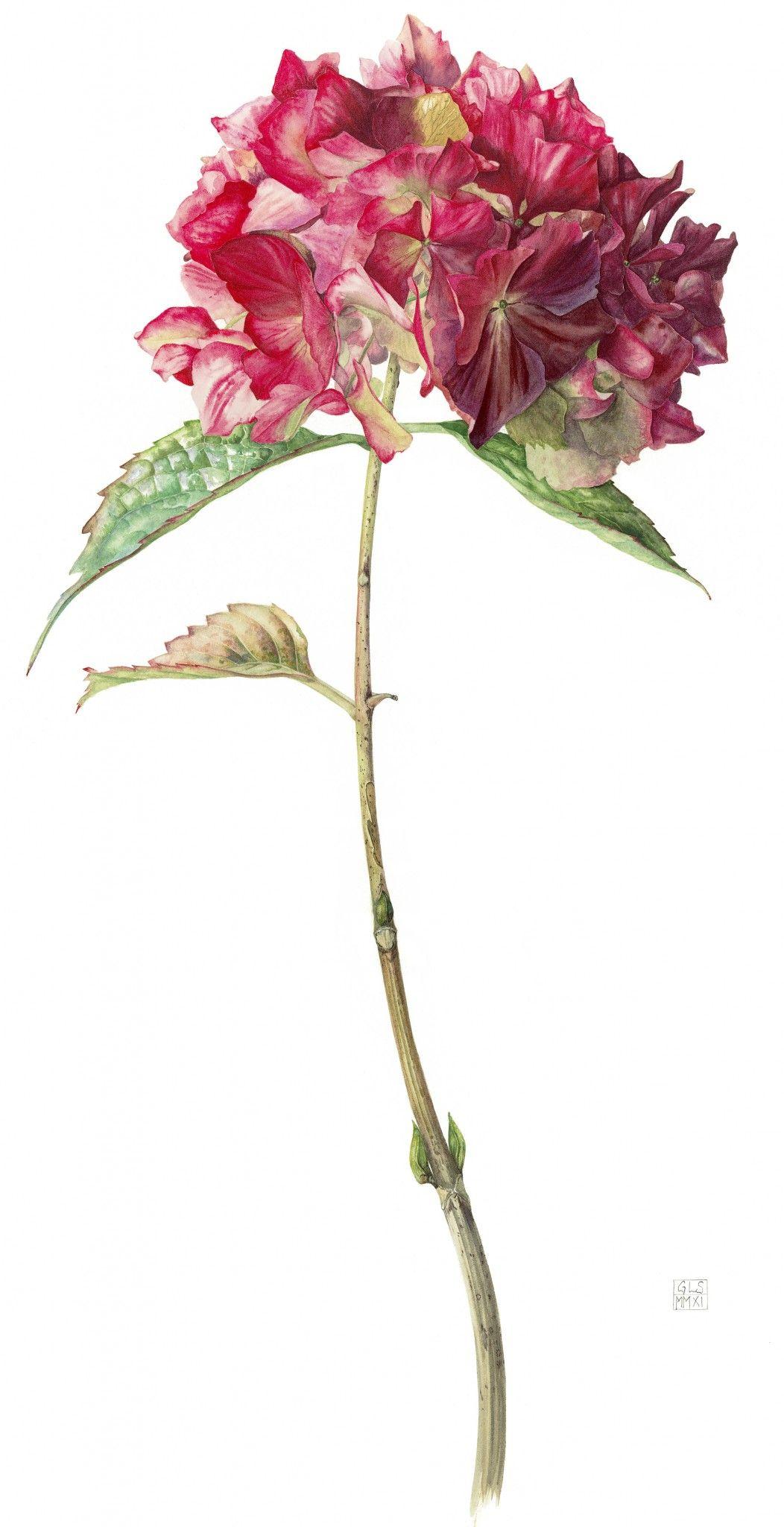 Pin Suzy Cline Botanicals.hang Em High In 2019