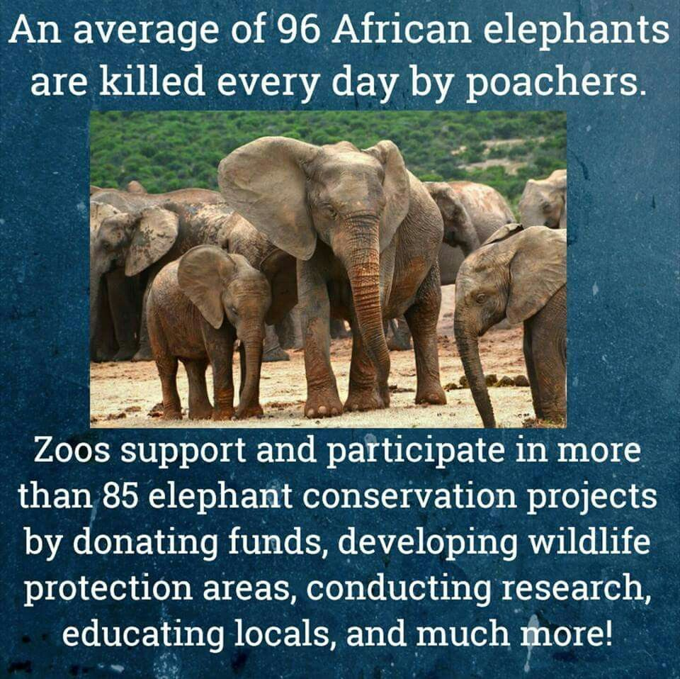 Pin by Zoos Saving Species on Join Zoos and Save Species