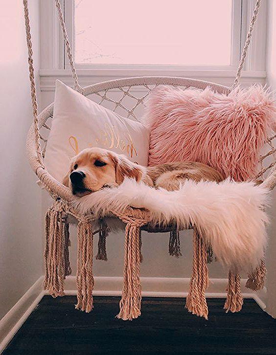 Puppies Puggle