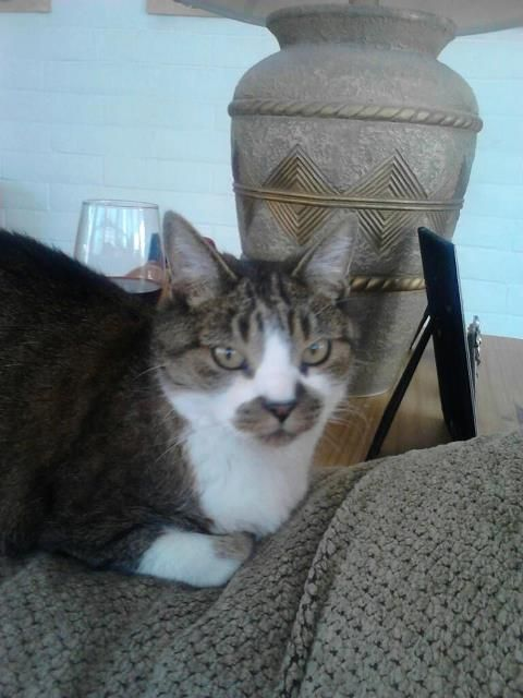 My beautiful Kitty Girl who adopted me over eight years ago.      Photo taken on 4-2-2012 and she went to Kitty Heaven on 4-16-2012!    Rest in peace my beautiful girl!  You brought me such joy and blessing! ~Mary Jean Marquez
