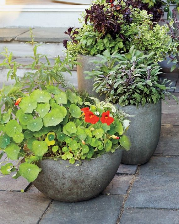 Make the most of a sunlit porch and create curb appeal by cultivating a container garden with edible plants. Herbs, vegetables, and edible flowers all make marvelous doorstep companions and offer hearty helpings of curb appeal, to boot.