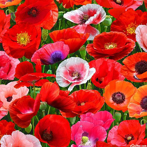 Poppies - Red Carpet -Quilt Fabrics from www.eQuilter.com