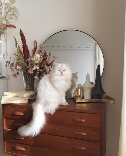 Adenorah Cats Cat Aesthetic Decor