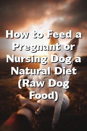 Kylie Ogden Wie man einen schwangeren oder stillenden Hund mit einer natürlichen Diät füttert (rohes Hundefutter)   – Dogs