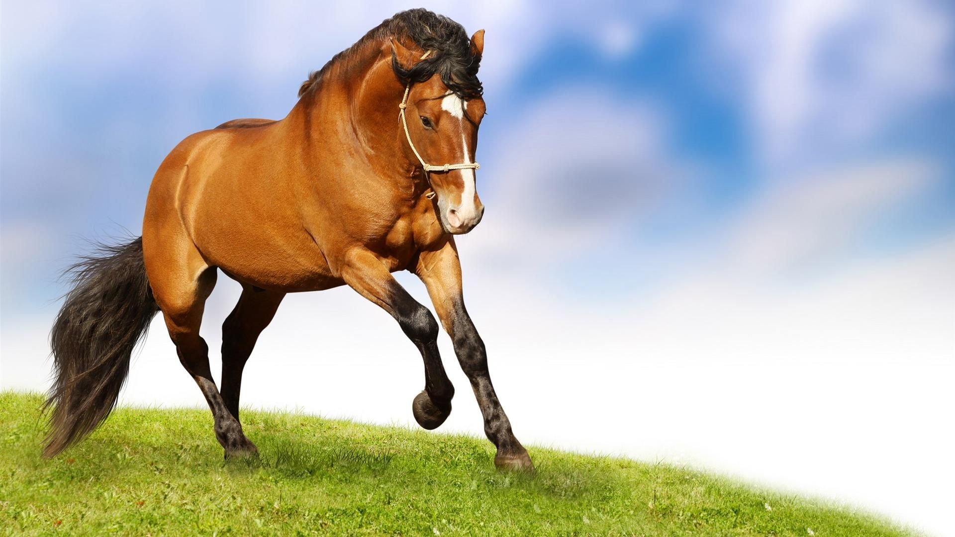Hd wallpaper horse - Christmas Horses Wallpaper For Computer Home Animals Pictures Horse Wallpapers Horses Pinterest Horse Wallpaper And Wallpaper