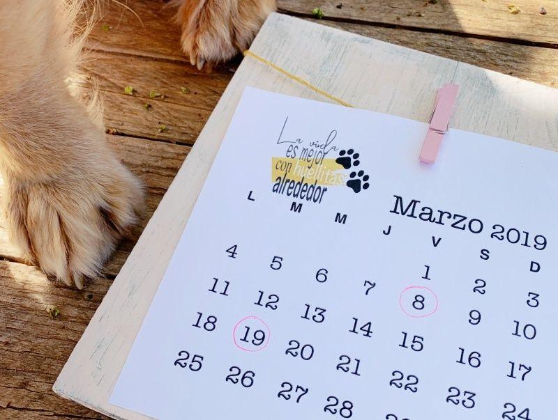 Calendario Perruno.La Vida Es Mejor Con Huellitas Alrededor Marzo Perruno