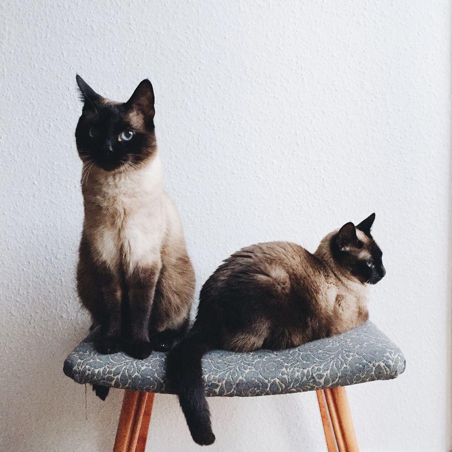 Baby animals instagram - Instagram Zoelouise187