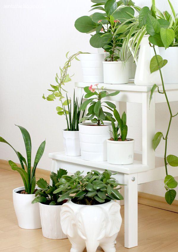 show your plant gang urban jungle bloggers garten pinterest pflanzen zimmerpflanzen und. Black Bedroom Furniture Sets. Home Design Ideas