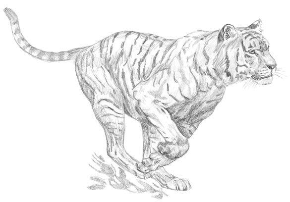 épinglé Par Anne Lise Joël C Sur Tats Dessin Tigre Art Tigre Dessin D Animal